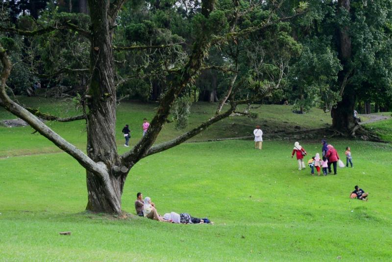 Salah satu taman di kebun raya Cibodas, asri dan memikat.