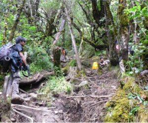 Taman Nasional Gede – Pangrango Sediakan Kuota 300 Orang perhari, untukApa?