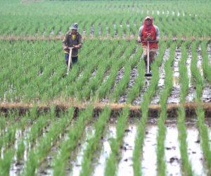 Tisna Umaran: Program 5000 Petani Milenial Diharapkan Dongkrak Ekonomi Daerah